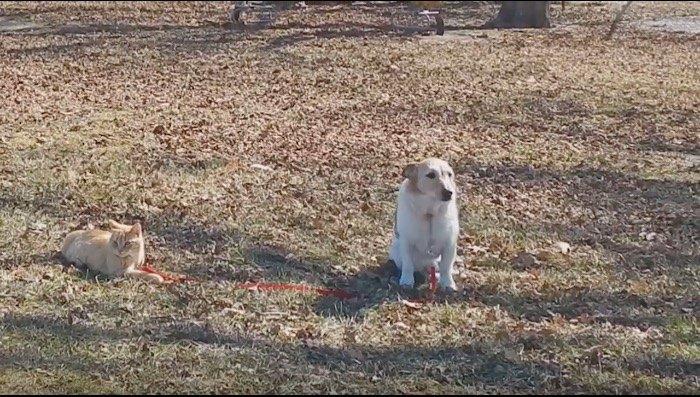 座り込んでしょんぼりする犬