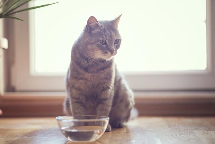 飲み水の入ったボウルの前に座る猫