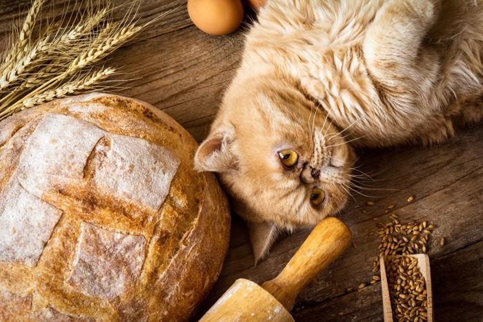 ネコと色々なパン