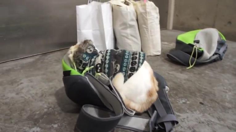 バッグに収まる猫(横から)