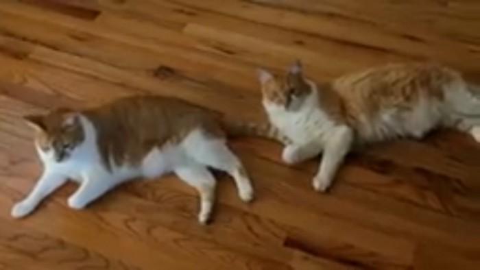 寝そべる猫たち