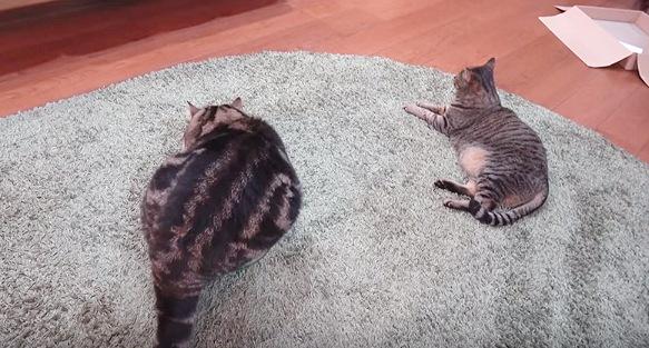上から見る猫2匹