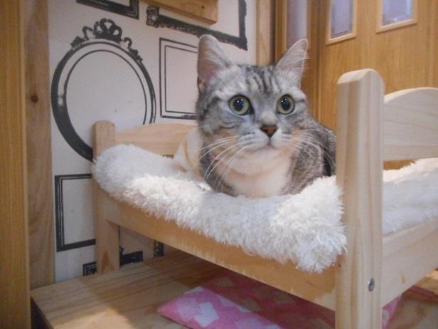 神戸の猫カフェ「ニャーニャの森」の猫