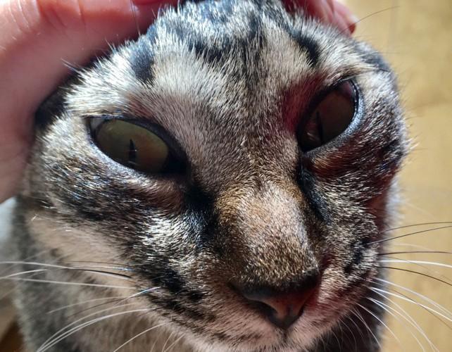 エイリアンちっくな猫