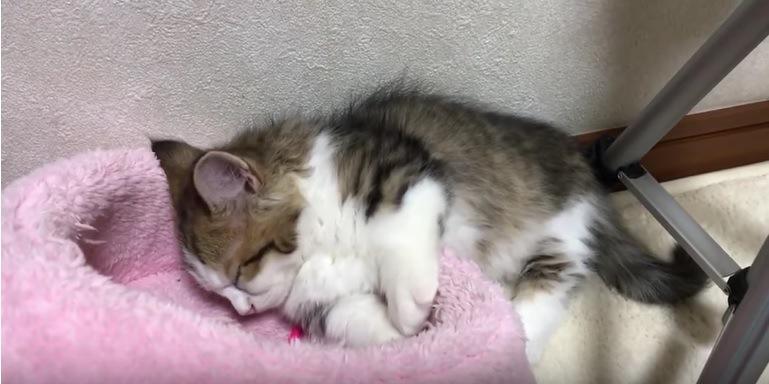 首を落として寝る子猫