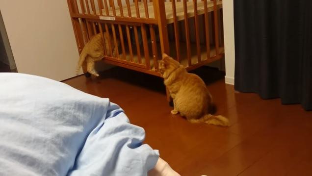 ベッドの中に入ろうとする猫
