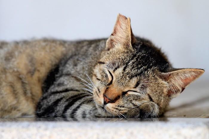 手を枕にして眠る猫