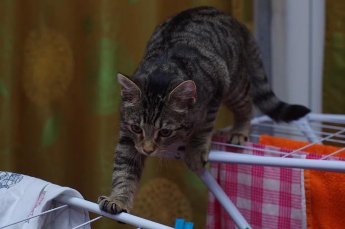 足場の悪い所を歩く猫