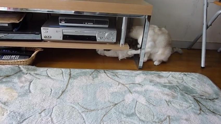 オモチャのお腹を押す猫