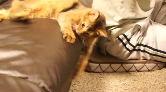 ソファにしがみ付く猫