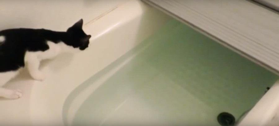 お風呂場の猫ちゃん