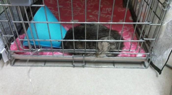 入院中の子猫