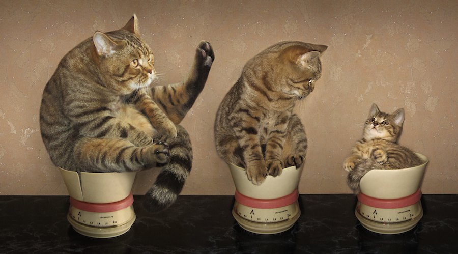 子猫から成猫まで猫の成長