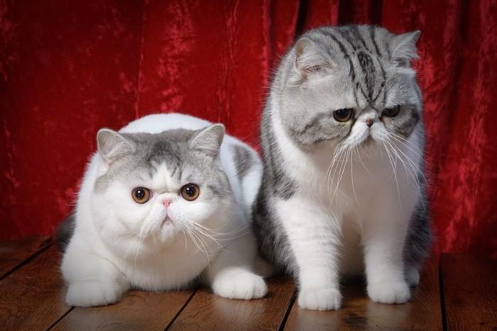 2匹並んでいる猫