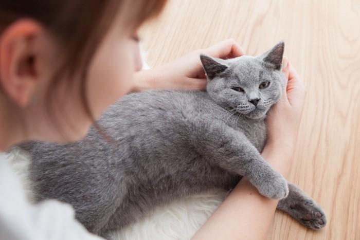 グレーの猫とスキンシップをとる女性