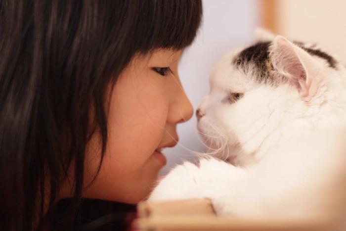 女の子と見つめ合う猫