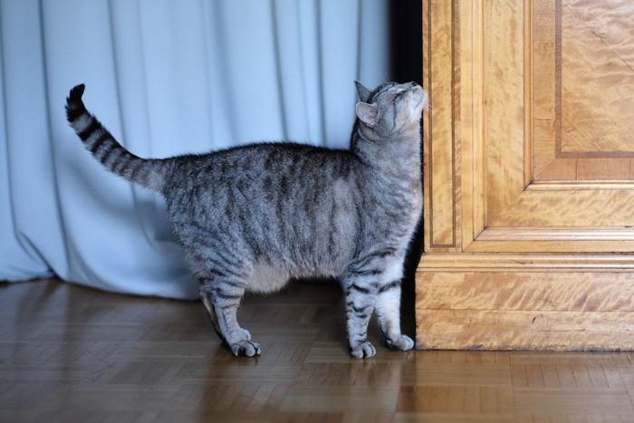 タンスの角にスリスリする猫