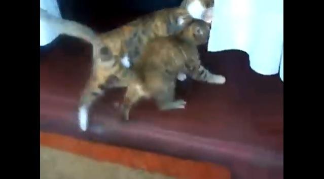カーテンの奥へ向かう2匹の猫