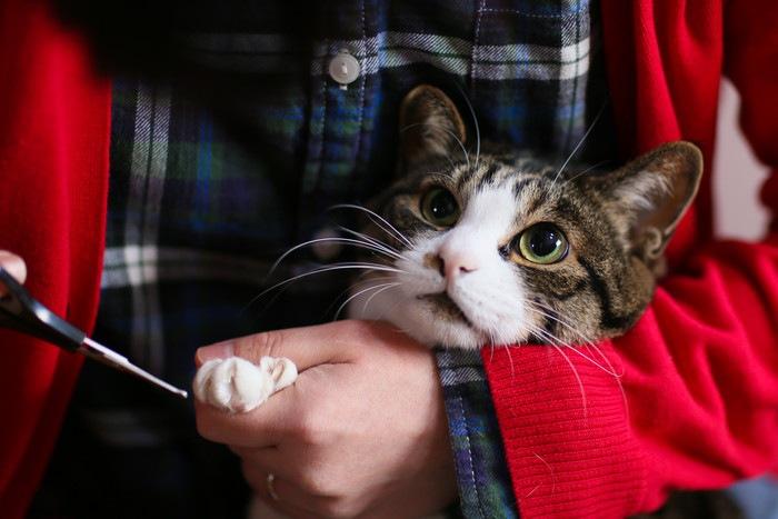 抱きかかえられて爪切りしてもらっている猫
