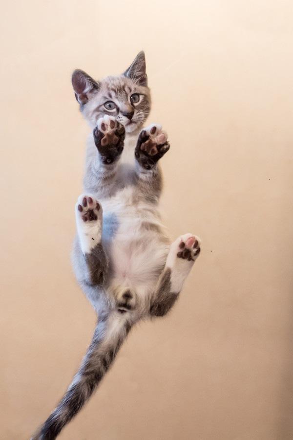 下から見る猫の肉球