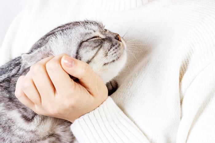 飼い主に抱かれてうっとりする猫