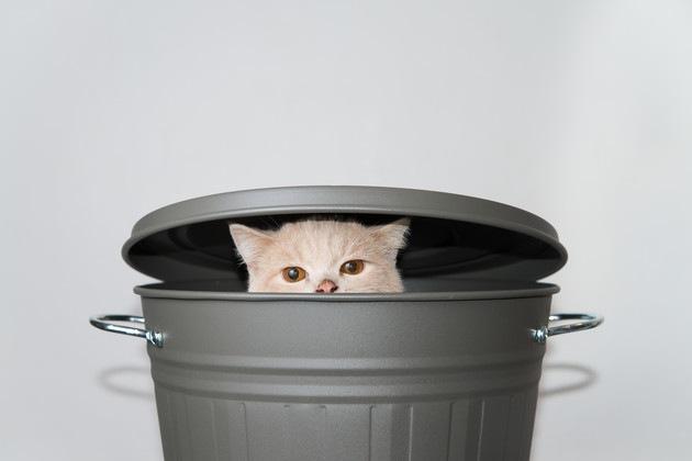 缶から顔を出している猫
