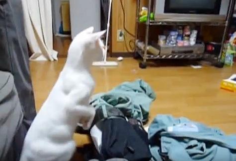 ジャンプする方角を見る猫