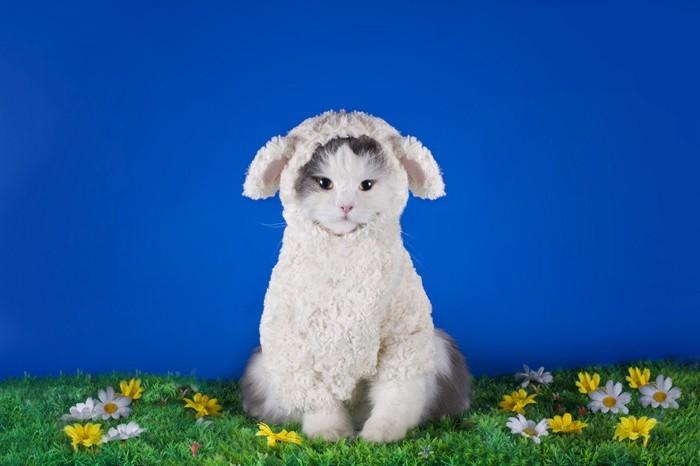 かぶりものを着た猫