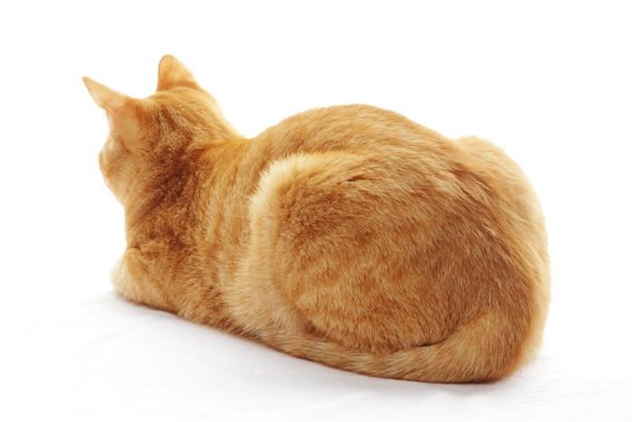 背中を丸めて座る後ろを向いた猫