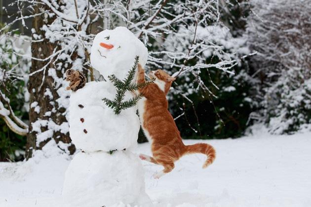 雪だるまに飛びかかる猫