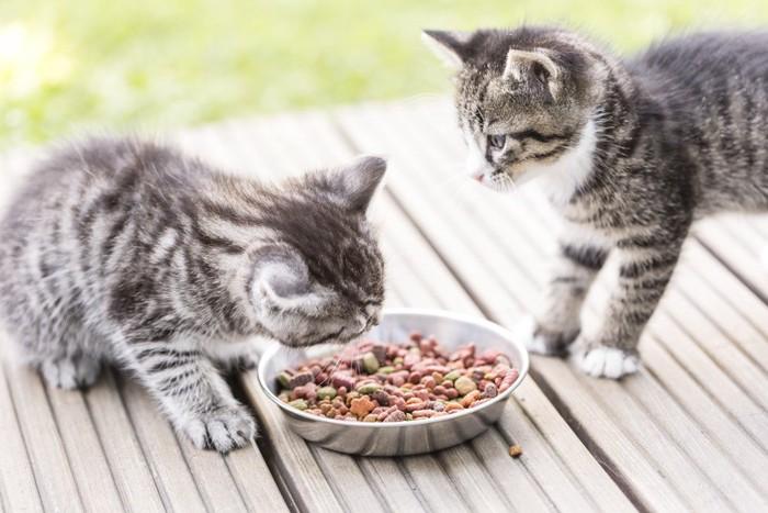 餌を食べる長毛の猫