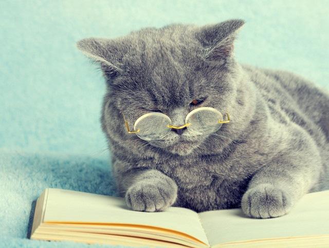 高齢期と呼ばれる年齢になった猫