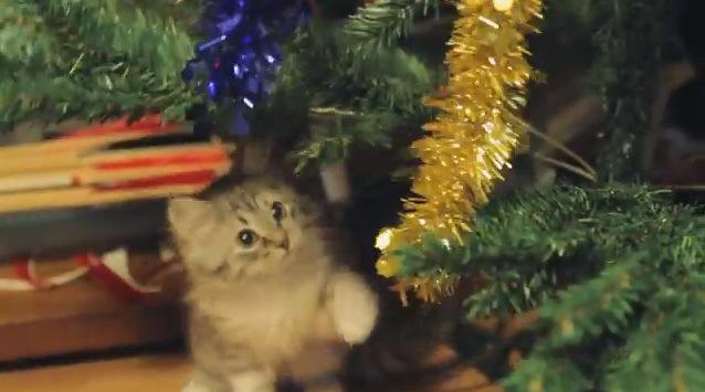 金色のモールにじゃれる子猫