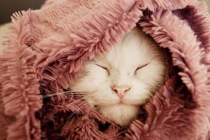 毛布にくるまれた猫