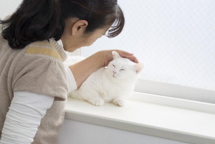 女性に撫でられる白猫