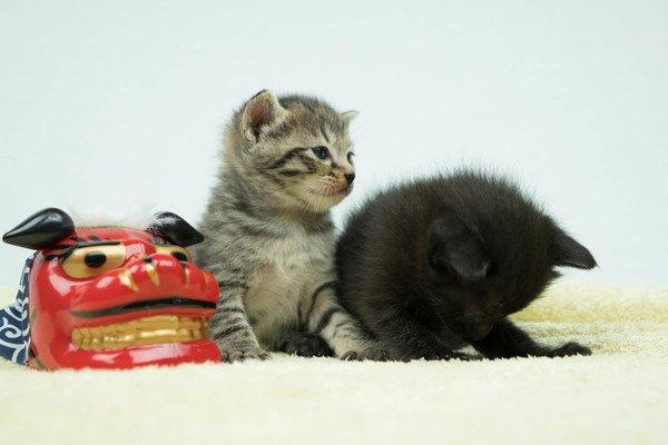 子猫と獅子