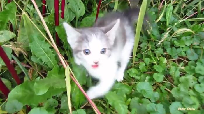 臨戦態勢な猫
