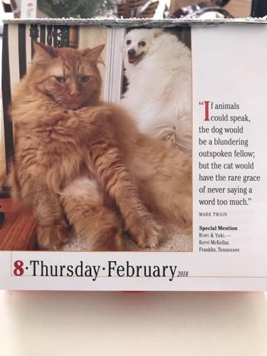 カレンダー中身猫と犬
