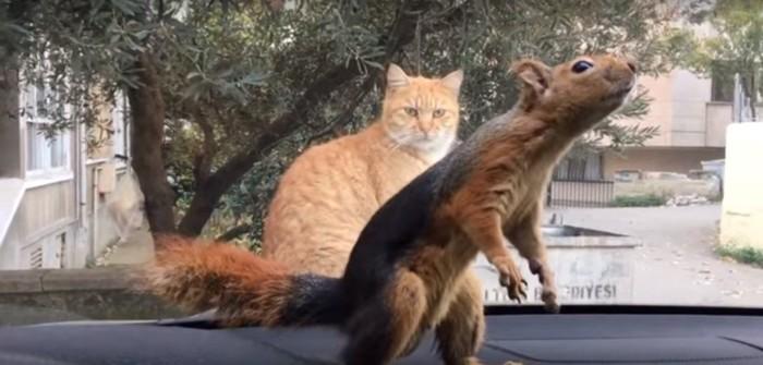 リスを見つめる猫