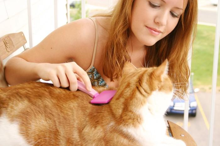 猫のブラッシングをする女性