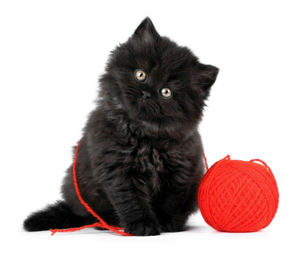 ふわふわの黒い子猫