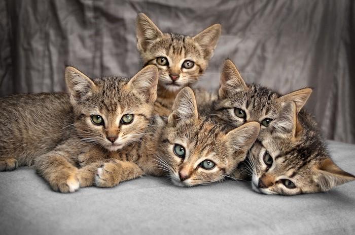 くつろぐ五匹の猫たち