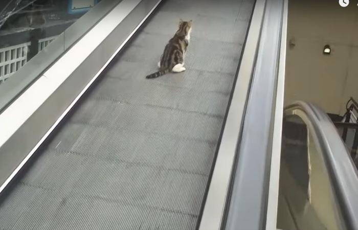 オートスロープに運ばれる猫