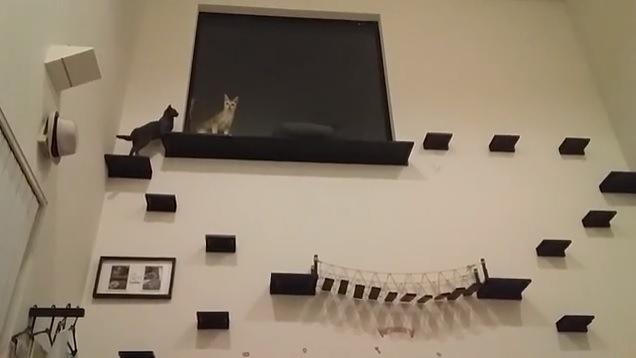上る黒猫とこちらを見る茶色い猫