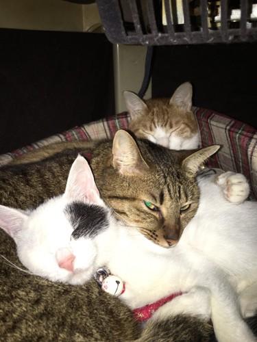 フラッシュに目を細める猫