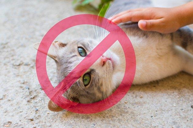禁止マークとマンションにいる猫