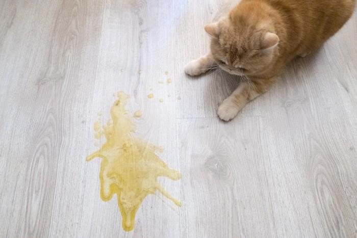 フローリングに嘔吐した猫