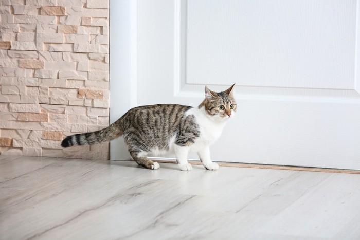 扉の前を歩く猫