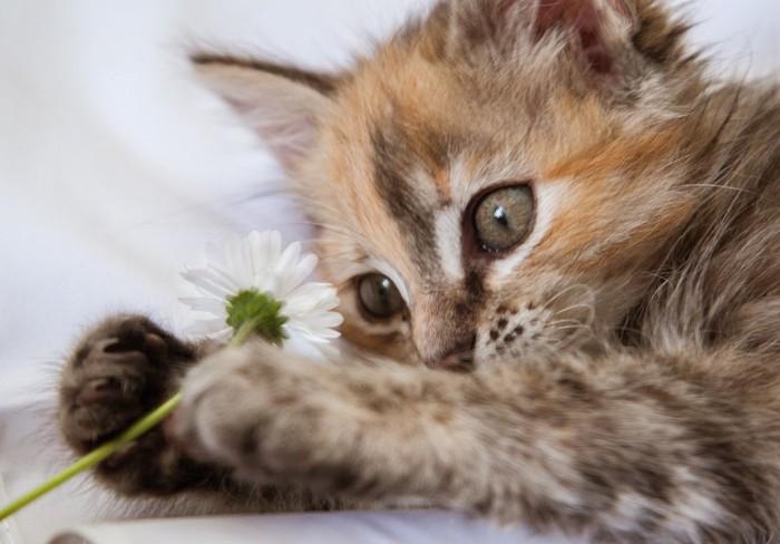 花で遊んでいる猫