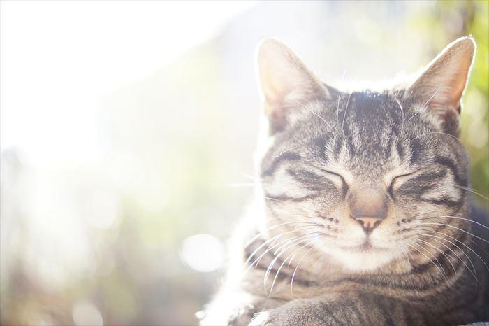 目を閉じている猫